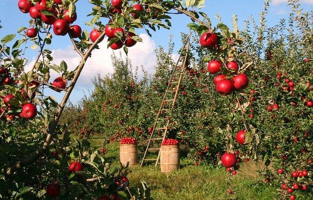 apple-1873078_640